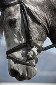 Detail of the head of a purebred Spanish horse — Foto Stock