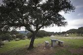Столы для барбекю на зеленой траве в Солнечный день — Стоковое фото