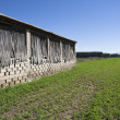 A drying shed on a tobacco field — Stock Photo