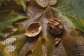 Walnut open in a dry leaf — Stock Photo