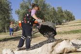 A farmer dumps olives in a lot — Foto de Stock