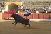 Spanish recortador performed — Stock Photo