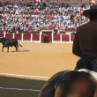 Bullfighter on horseback spanish — Stock Photo