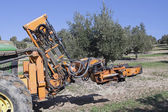 Vibrating machine in an olive tree — Stock Photo