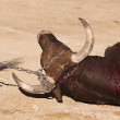 Dragging of the bull died after the fight in the bullring of Baeza — Stock Photo