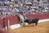 Andy Cartagena, bullfighter on horseback spanish, brave bull pushes to the horse against the burladero — Stock Photo