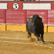 Capture of the figure of a brave bull in a bullfight — Stock Photo