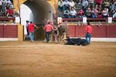 The dragging of a dead bulls carcass from the ring — Stock Photo