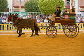 Carriage pulled by two horses — ストック写真