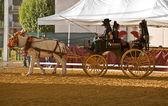 Iki at tarafından çekti taşıma — Stok fotoğraf