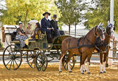 Carriage pulled by two horses — Stock Photo