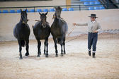Equestrian test functionality with 3 pure Spanish horses, also called cobras 3 Mares, Spain — Stock Photo