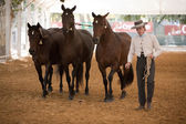 Equestrian test functionality with 3 pure Spanish horses, also called cobras 3 Mares — Stock Photo