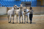 Equestrian test functionality with 3 pure Spanish horses — Stockfoto