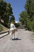 Elder walking in donkey close to the castle — ストック写真