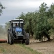 Farmer clearing the ground in an olive trees field — Stock Photo