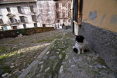 Cat on paved near the river of Darro — Stockfoto