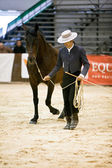 Equestrian test of morphology to pure Spanish horses — Stock Photo