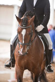 Rider competing in dressage competition classic — Stockfoto