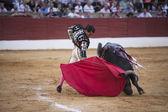 Bullfighter Ivan Fandiño bullfighting with the crutch in the Bullring of Baeza — Stock Photo