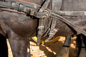 Detail of buckles and straps of a horse used for the transportation of carriages — Stock Photo