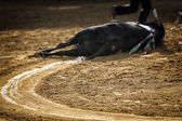 Dragging of the bull died after the fight in the bullring of Pozoblanco — Stock Photo