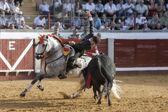 At sırtında İspanyol Boğa güreşçisi boğa banderillas pozoblanco içinde koyarak leonardo hernandez — Stok fotoğraf