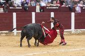 Spainish matador rafaelillo byków przeszywający byk na arenie w ubeda — Zdjęcie stockowe