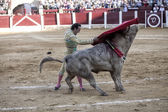 Spanish bullfighter Manuel Jesus with the cape bullfighting a bull of nearly 600 kg of grey ash during a bullfight held in Ubeda — Stockfoto