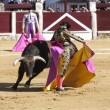Spanish bullfighter Morante de la Puebla with the capote or cape bullfighting called chicuelina a bull of nearly 600 kg during a bullfight held in Ubeda — Stock Photo