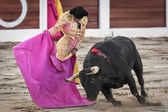 Spanish bullfighter Manuel Jesus El Cid with the capote or cape bullfighting a bull of nearly 600 kg of black ash during a bullfight held in Linares — Stock Photo
