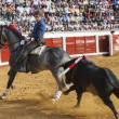 Spanish bullfighter on horseback Pablo Hermoso de Mendoza Riding sideways in a difficult maneuver while the bull pursuing him in Pozoblanco — Stock Photo #38393943