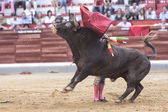 Spanish bullfighter bullfighting giving a spectacular chest pass with the crutch in the Bullring of Jaen or called Coso of Alameda — Stock Photo