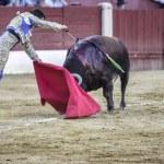 Постер, плакат: Bullfighter Julian Lopez El Juli stabbing the bull with the swor