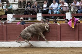 Bull about 650 Kg galloping in the sand right when I just got out of the bullpen, ramming with their head in the burladeros, people are terrified, Linares — Foto de Stock