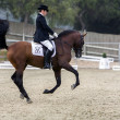Stock Photo: Spanish purebred horse competing in dressage competition classic
