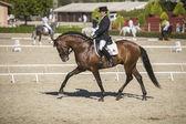 испанская лошадь чистой расы принимает участие во время упражнения equ — Стоковое фото