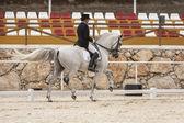 Koń hiszpański czystej rywalizacji w konkursie ujeżdżenia klasyczne — Zdjęcie stockowe