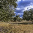 Stock Photo: Ecological cultivation of olive trees in province of Jaen, Spain