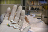 Hand with glove of white latex supports several tablets — Stock Photo
