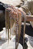 Just the caught octopus in hands, Estepona, Andalusia, Spain — Stock Photo