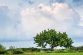 Lonely fresh green tree under very dramatic sky — Stock Photo