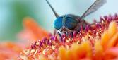 Hoge gedetailleerde macro-opname van kleurrijke wilde vliegen met verbazingwekkende blauwe ogen op de mooie bloem — Stockfoto