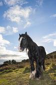 Black horse at the mountain — Stock Photo