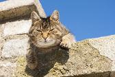 Hermoso gato — Foto de Stock
