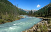 Mountain Altai. river Shavla — Stock Photo