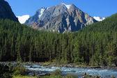 Mountain Altai. river Shavla — Stock Photo