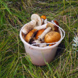 Bucket with mushrooms — Zdjęcie stockowe #38239121