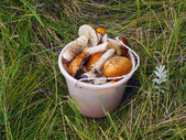 Bucket with mushrooms — Zdjęcie stockowe
