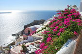 Floral hill in Oia, Santorini — Stock Photo